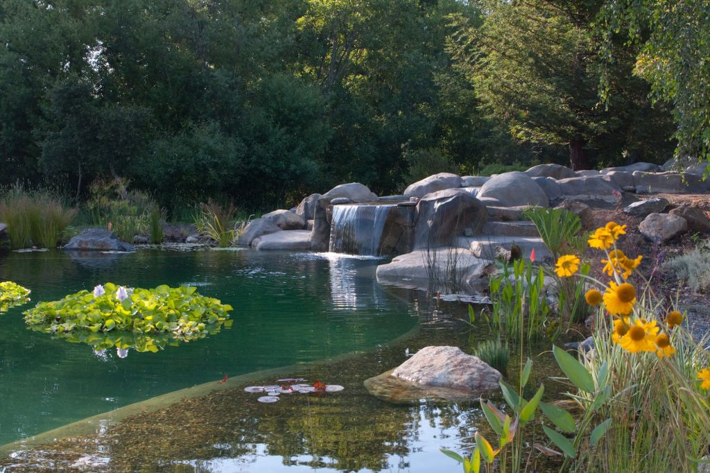 This is an assume natural swimming pool, this beauty has a walkout beach, dock with ladder, waterfall, water plants and a dive rock!