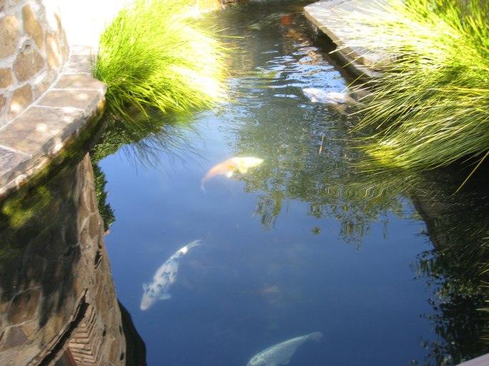 Koi Pond 3