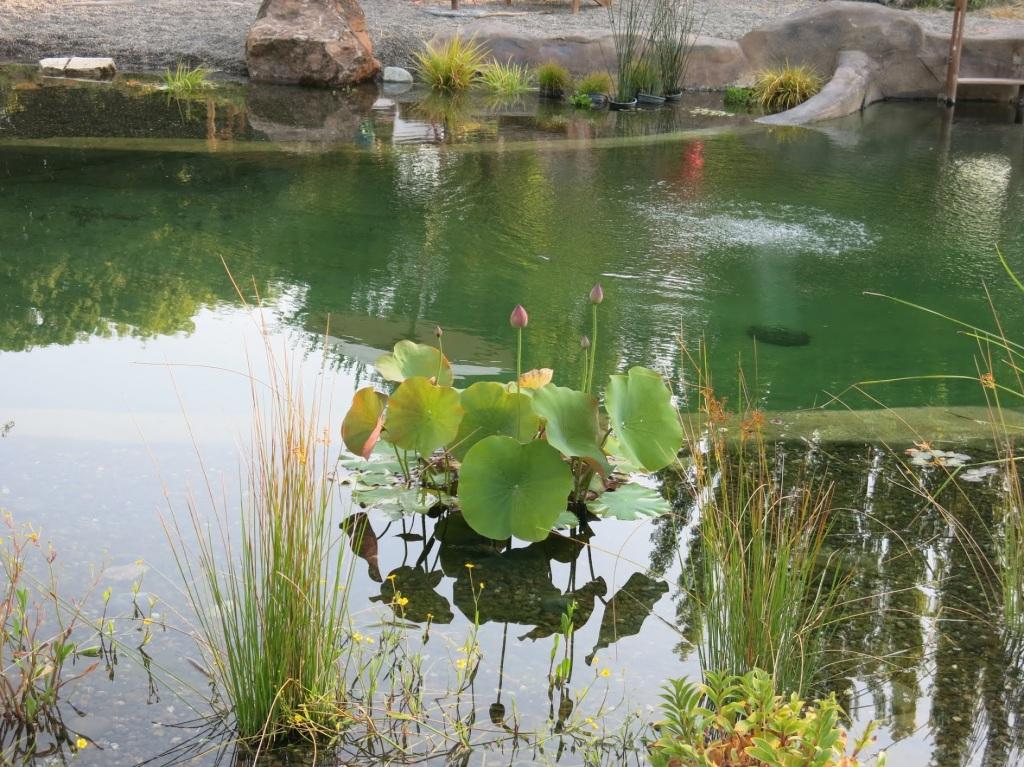 Zehrer Lotus