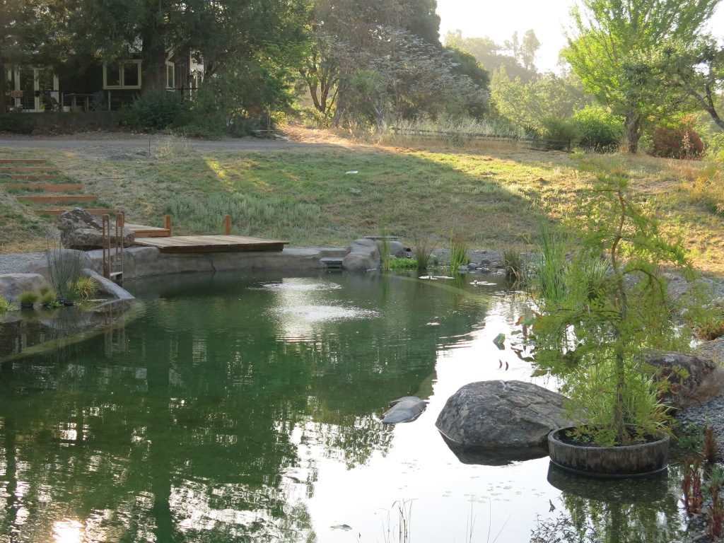 This is our first natural pond, it was built for laps. it is over 65' long, includes water plants, dive rock, walkout beach, dock and ladder.